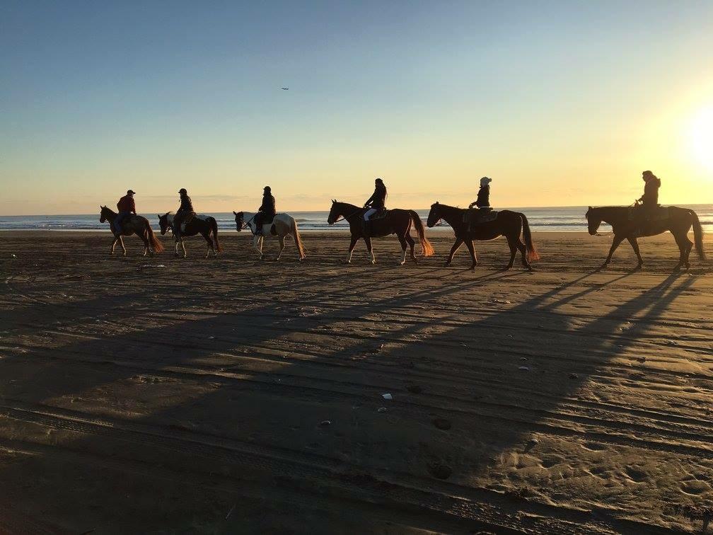乗馬クラブの サンシャインステーブルス
