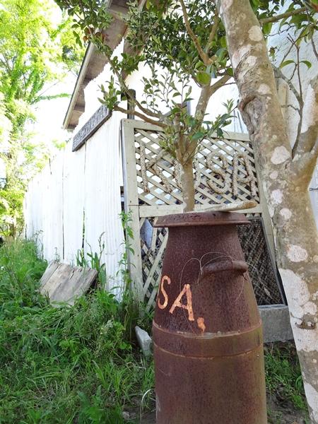 長生村のカフェのKUSA